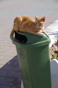 Cat on garbage can
